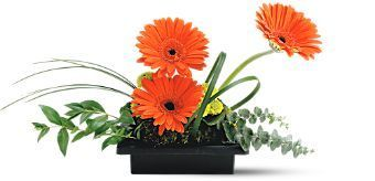 Vibrant gerbera are arranged with foliages and mosses.